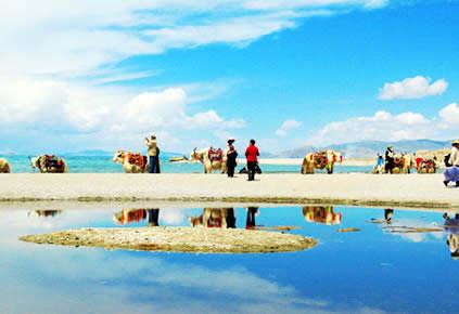黑马河+青海湖+茶卡二日游 (现付加100)