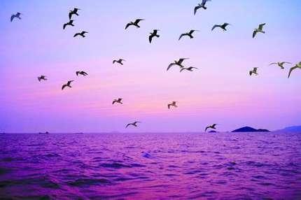 鸟岛/坎布拉/塔尔寺3晚4天双飞