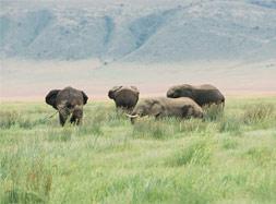 恩格罗恩格罗自然保护区