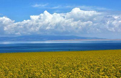门源油菜花-青海湖环湖摄影创作七日