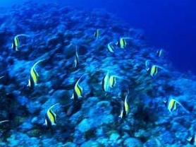 天涯热带海洋动物园